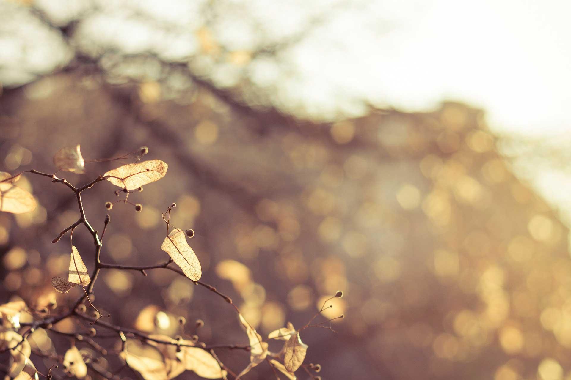 autumn-226450_1920