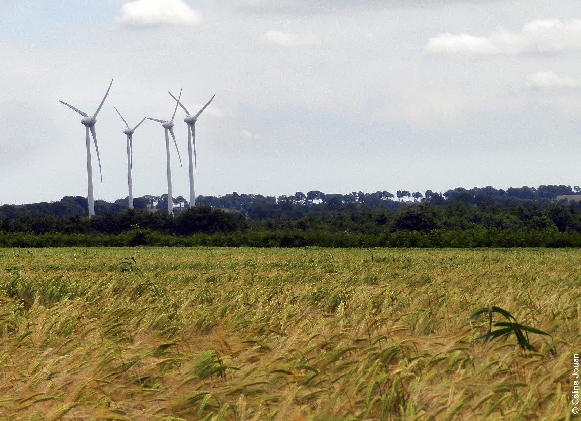 Parc éolien des Landes du Mené ©CJ