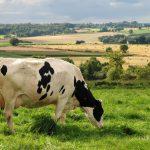 L'agriculture et l'élevage ©PYJ